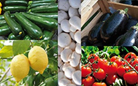 Alimentazione e salute - parte 2°